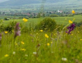 Transylvania-Holidays-9